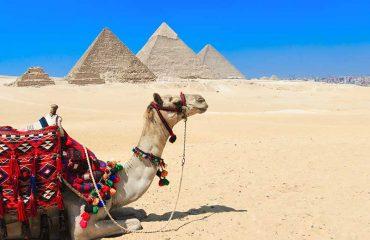 Cammello con Piramidi in sottofondo